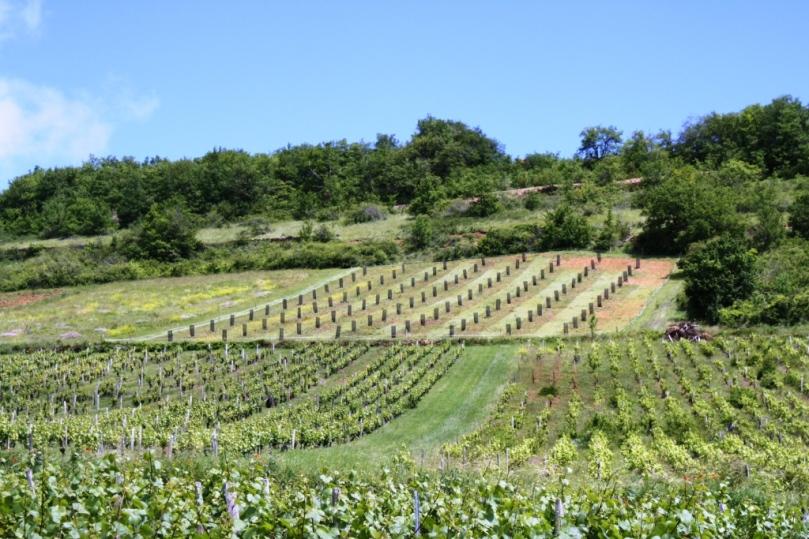 Never Ending Vineyards
